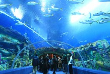 Chine : Le plus grand aquarium du monde